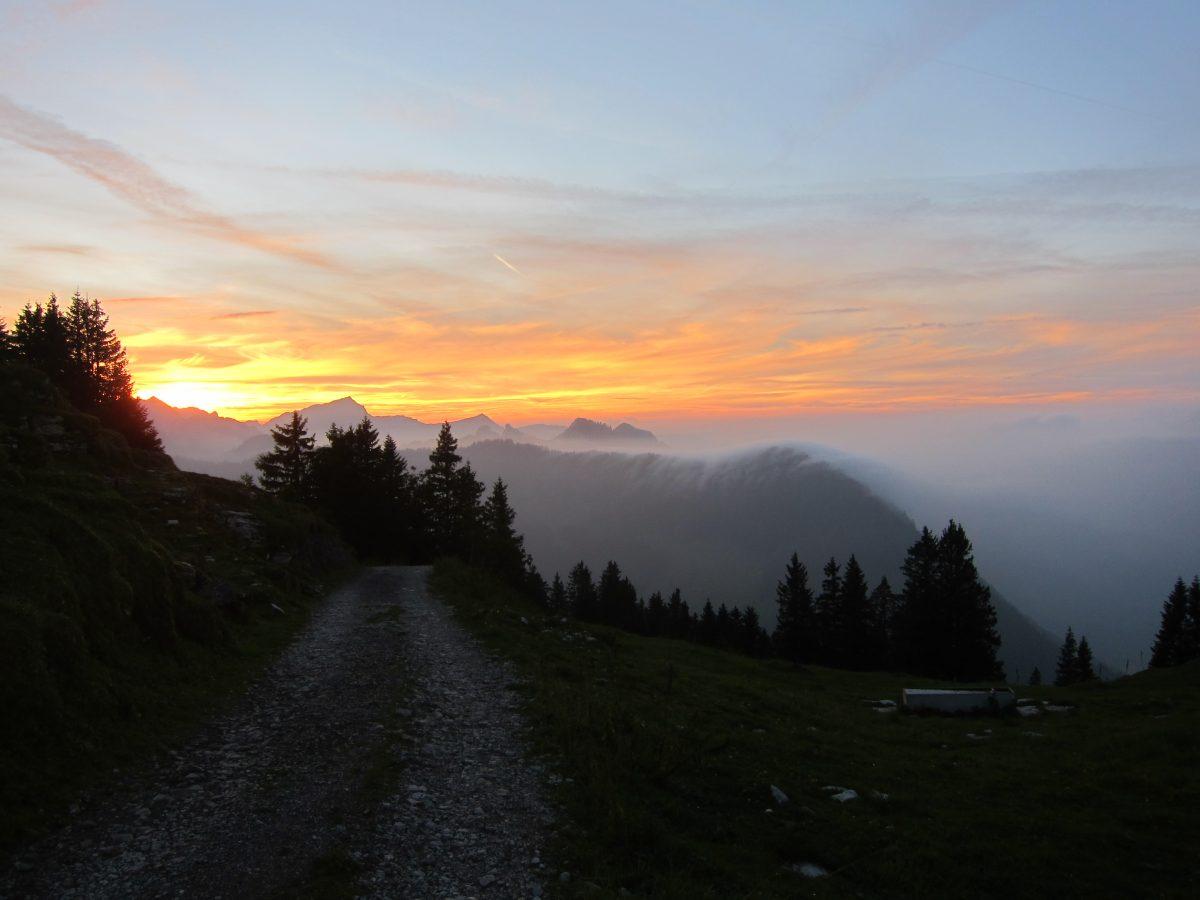 Wildgrünwandern in den Schweizer Alpen