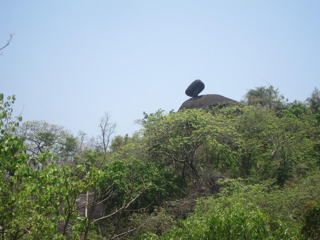 Der Dschungel von Goa